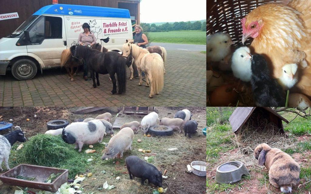 Tierhilfe Fritzi & Freunde