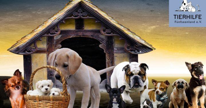 Tierhilfe Fünfseenland