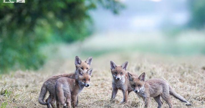 Wildtierschutz Deutschland e.V.